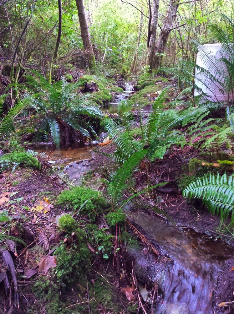 Our Creeks Flow Again