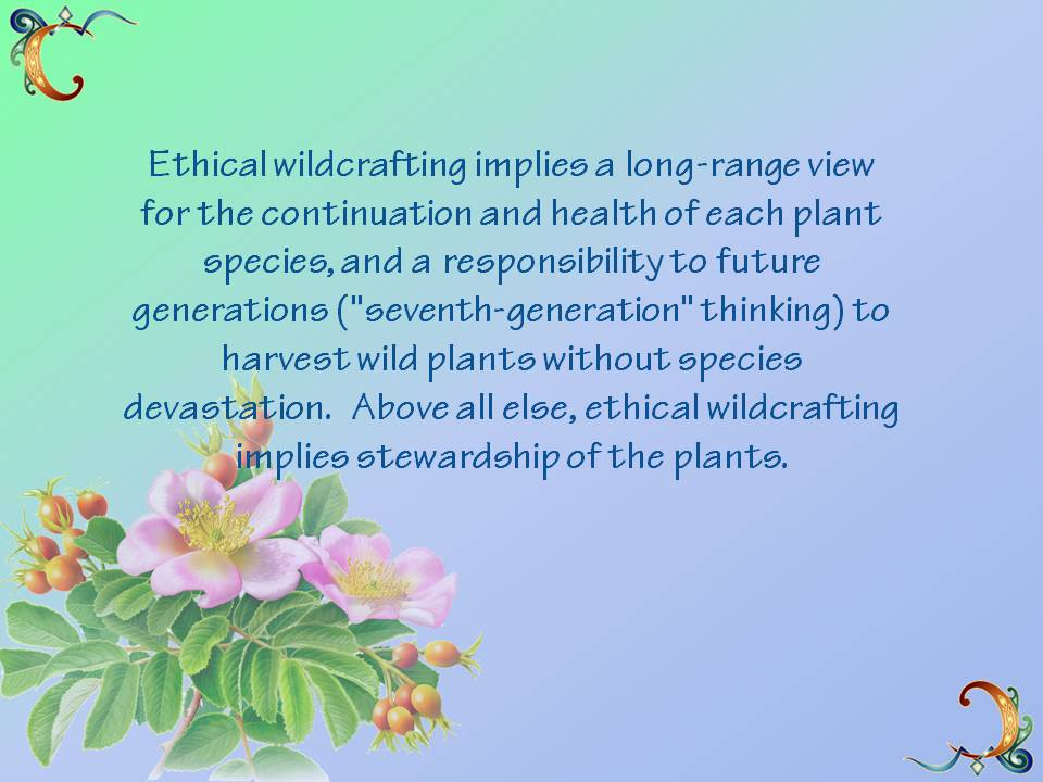 Ethical Wildcrafting