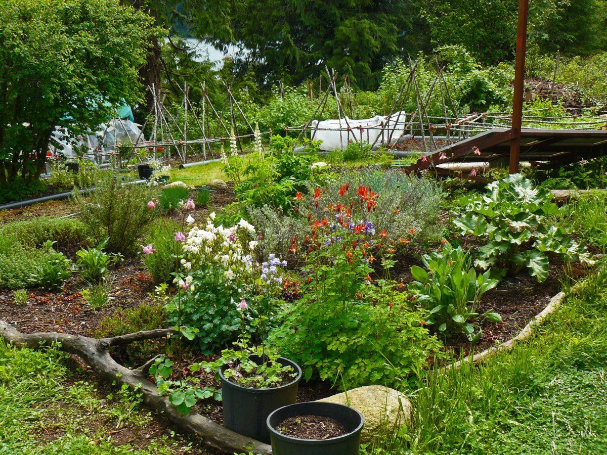 A Quick Garden Moment
